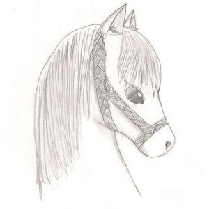 Кінь фото 2
