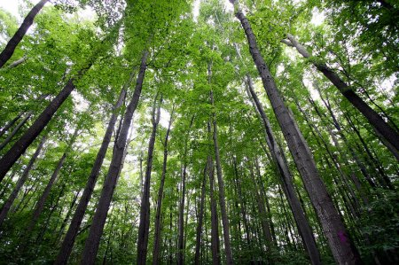 Що таке навколишнє середовище: визначення, особливості захисту та цікаві факти