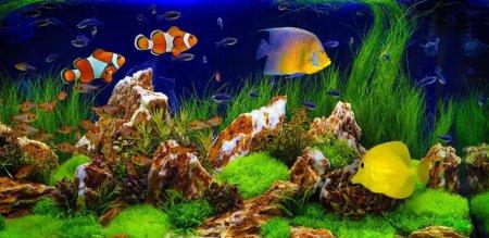 Калій в акваріумі з рослинами: дозування та використання як добрива